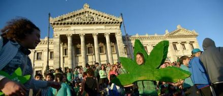 Ley de cannabis uruguaya: pionera de un nuevo paradigma